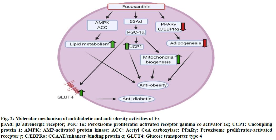 IJPS-antidiabetic