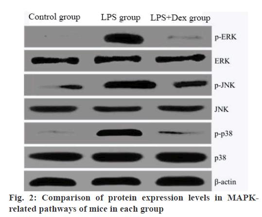 IJPS-protein
