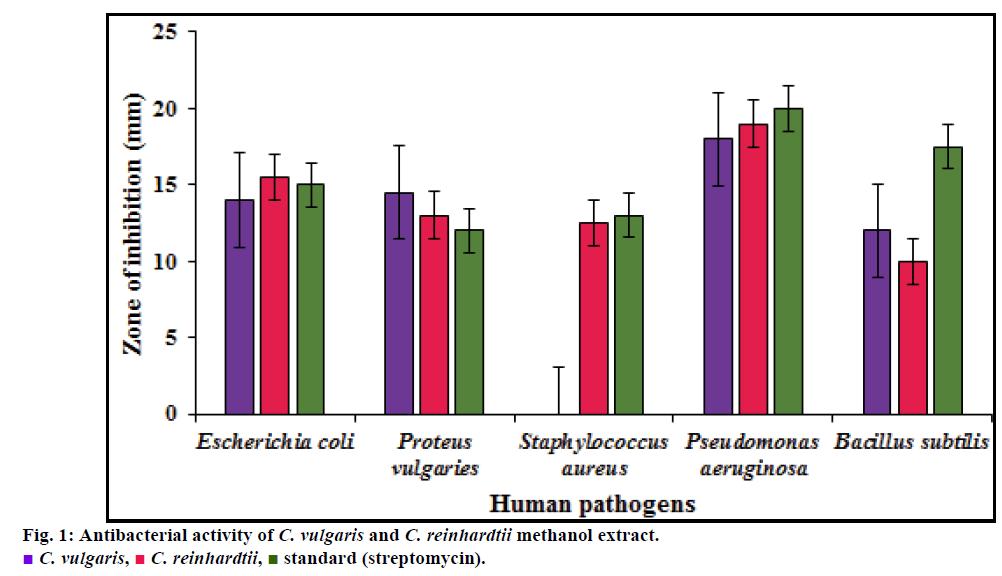 IJPS-Antibacterial-activity