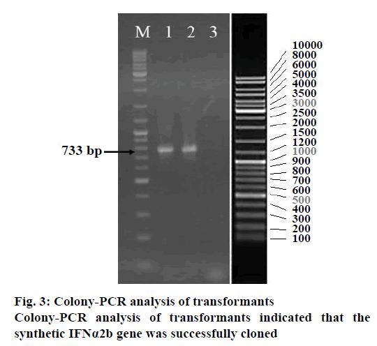 IJPS-Colony-PCR-analysis