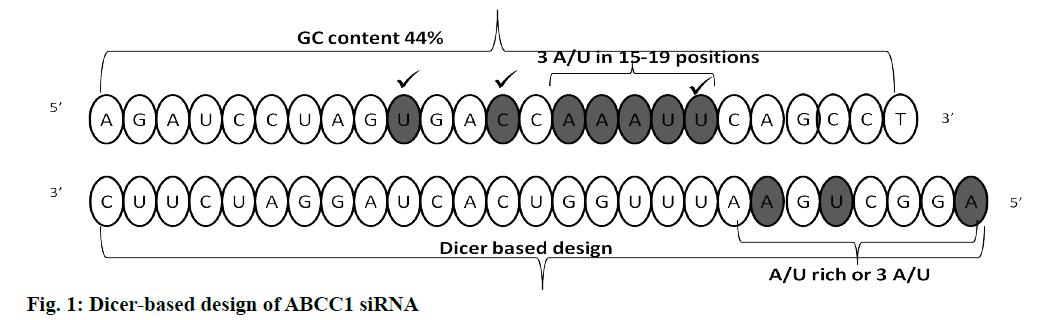 IJPS-Dicer-based
