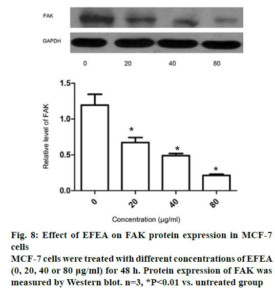 IJPS-FAK-protein-expression