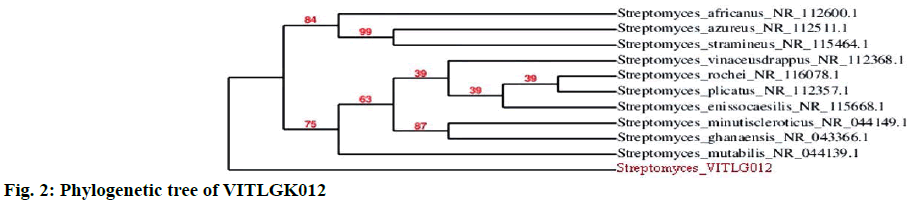 IJPS-Phylogenetic-tree