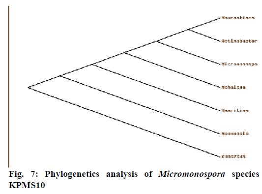 IJPS-Phylogenetics-analysis