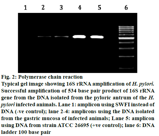 IJPS-Polymerase-chain-reaction