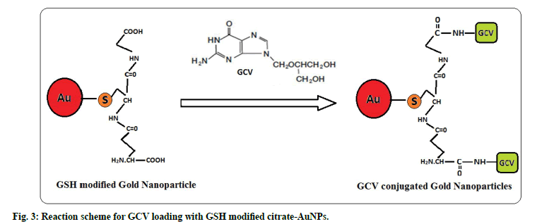 IJPS-Reaction-scheme-GCV-loading