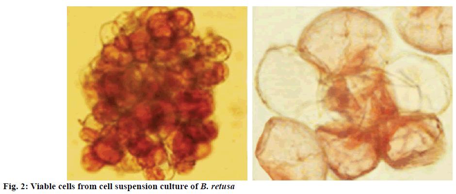 IJPS-Viable-cells