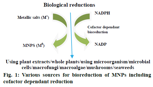 IJPS-bioreduction-MNPs-including
