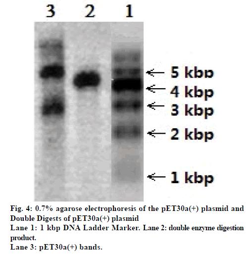 IJPS-double-enzyme-digestion