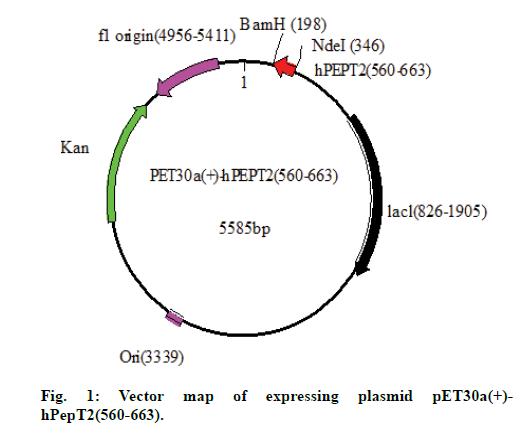 IJPS-expressing-plasmid