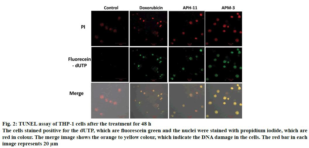 IJPS-fluorescein-green