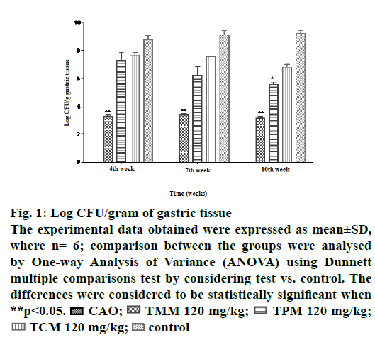 IJPS-gram-gastric-tissue
