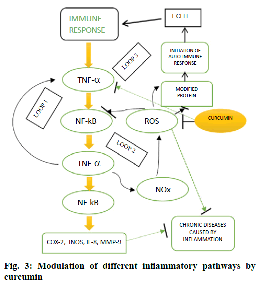 IJPS-inflammatory-pathways