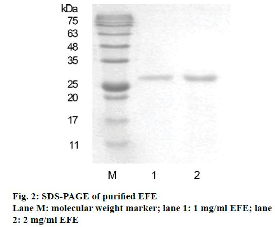 IJPS-molecular-weight-marker
