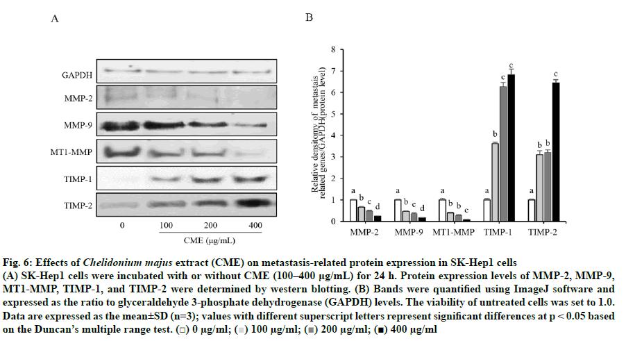 IJPS-protein-expression