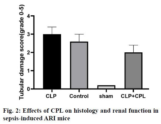IJPS-renal-function