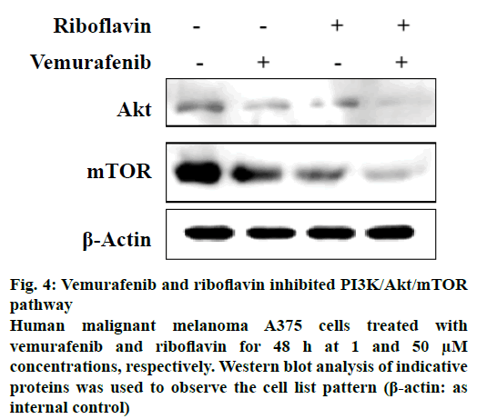 IJPS-riboflavin-inhibited