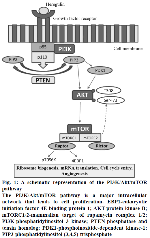 IJPS-schematic-representation