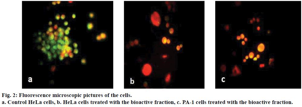 ijps-Fluorescence-microscopic