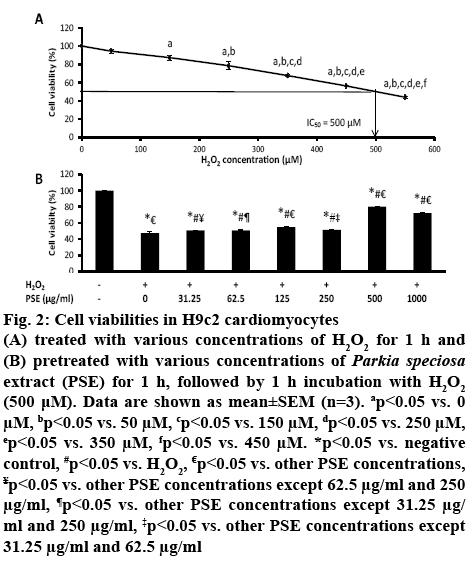 ijpsonline-cardiomyocytes