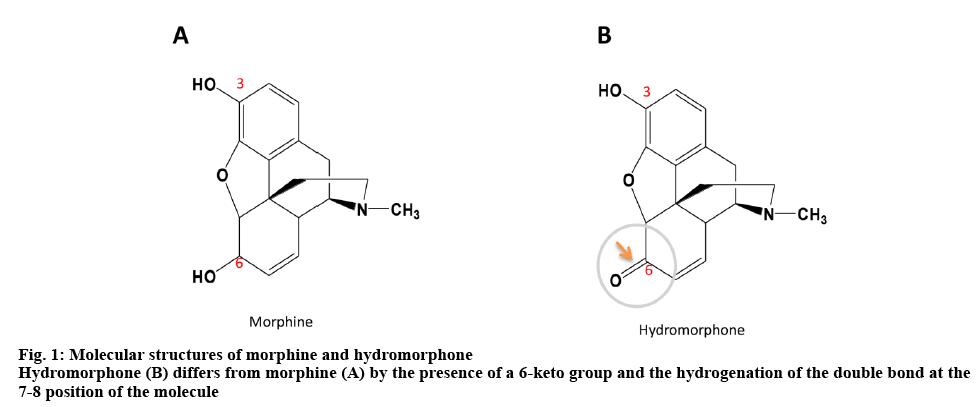 ijpsonline-hydromorphone