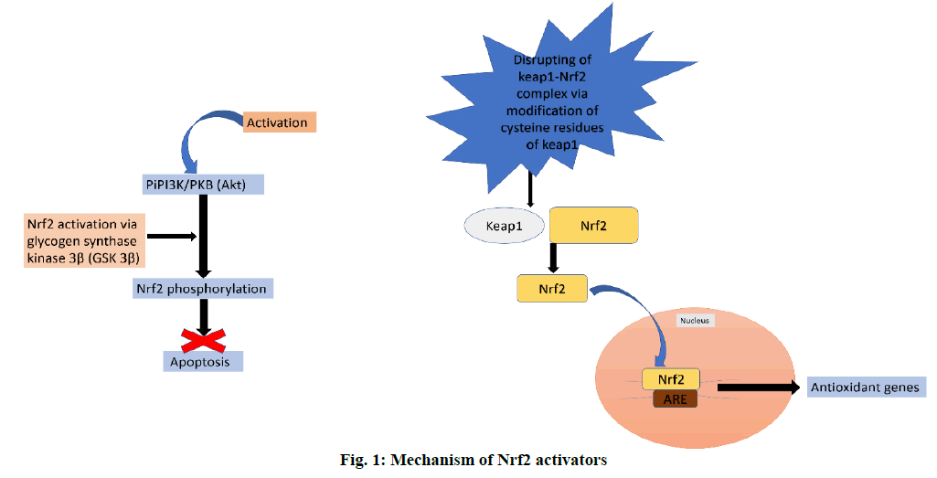 ijpsonline-mechanism-activators