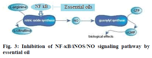 ijpsonline-signaling-pathway