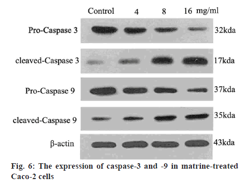 ijpsonline-treated